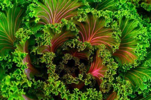 valor nutricional - alimentos sanos